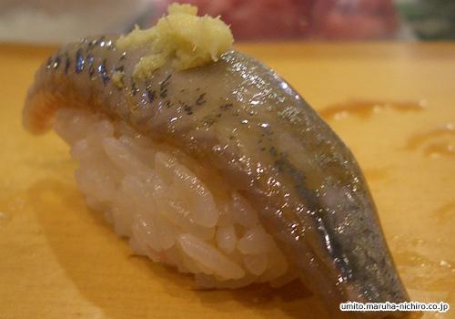 sardine,Sardinops melanostictus
