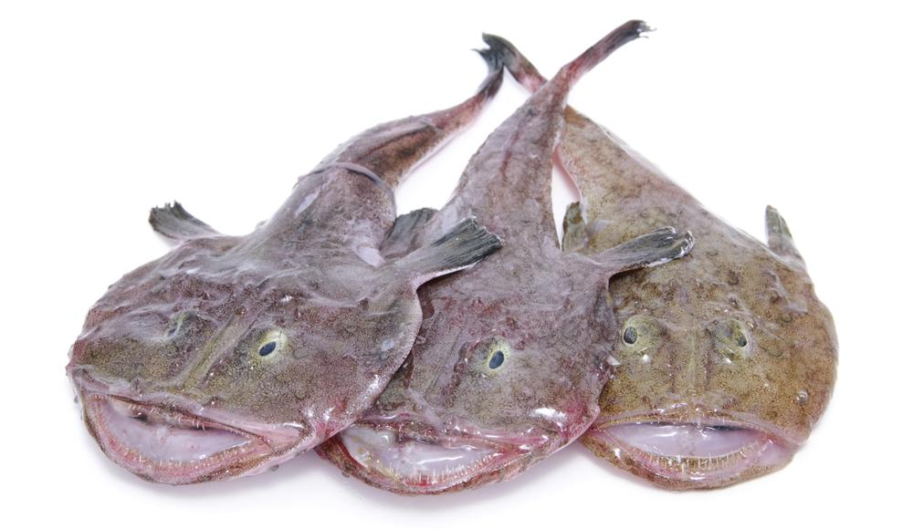 monkfish,Lophiomus setigerus