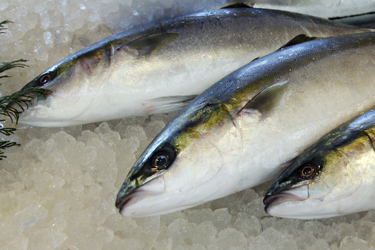 魚 へん に 冬 と 書い て 何と 読む